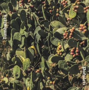 album cover cactus